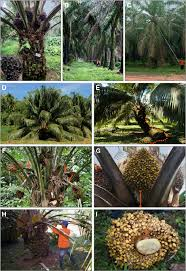 Commercial Plantations Water Filters Solutions