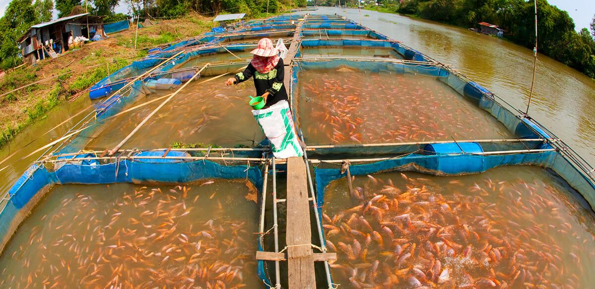 Fish Farm Water Filter System
